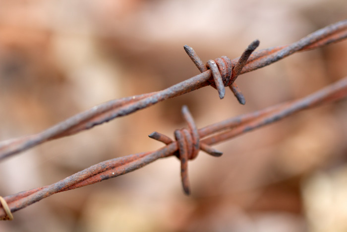 Day 52 - February 21, 2011 - Barbed Wire