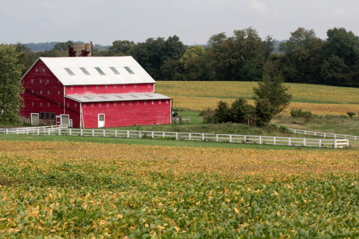 Day 267 - September 24, 2011 - Spring's Farm