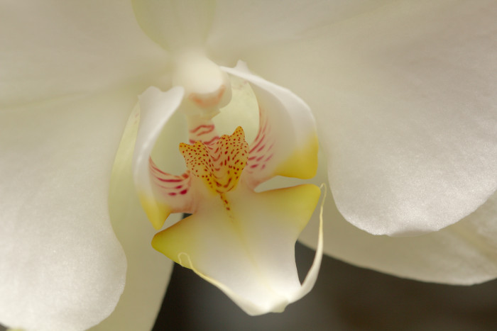 Day 363 - December 29, 2011 - Orchid