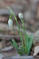 February 18, 2011<br />First Flower of Spring