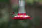 May 7, 2011<br />Ruby-throated Hummingbird